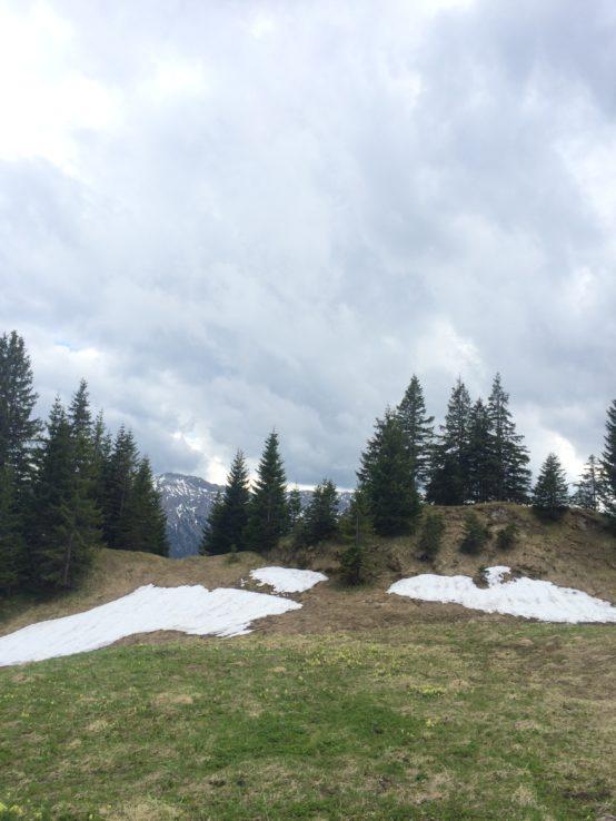 Ende Mai, zwei Tage vorher war noch Schneefall (sagt der Hüttenwirt)